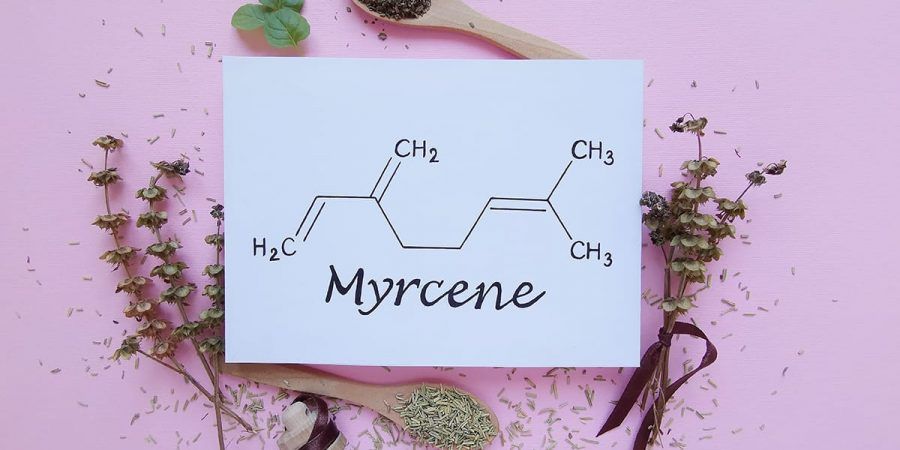 mycerene, one of the five most common cannabis terpenes, has an affect on cannabis and may have an affect on the body